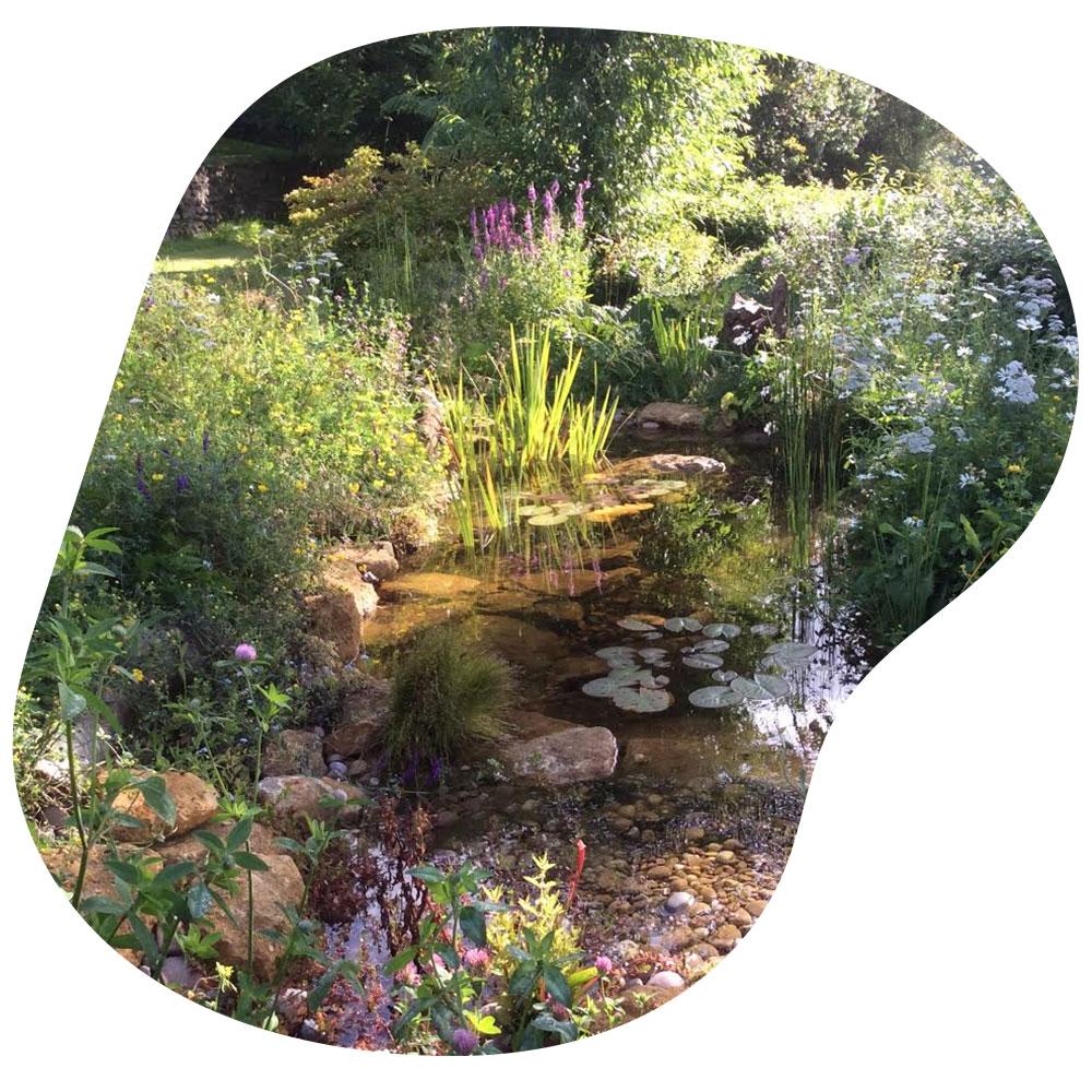 Ecosystem pond construction