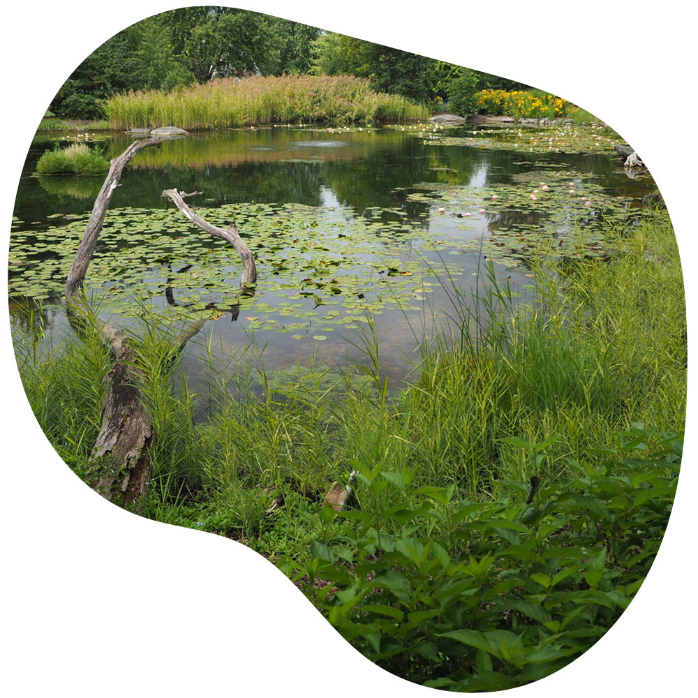 Large pond & lake management