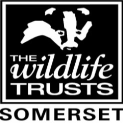 The wildlife trusts Somerset logo
