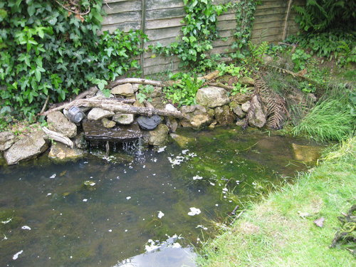 A wildlife pond that needs rethinking